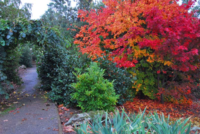 Gallery path in autumn